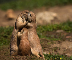 25 Wonderful Parenting Moments in the Animal World That Went Viral
